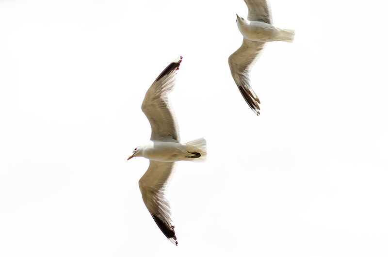 two seagulls in