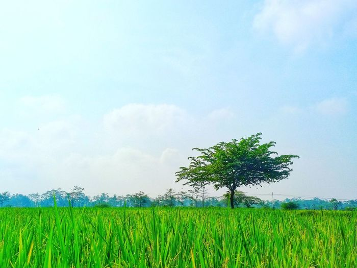 Tree Bird Cereal Plant Rural Scene Sky Grass Cloud - Sky Close-up Green Color Single Tree Patchwork Landscape Cultivated Land Farmland Rice Paddy Agricultural Field Farm