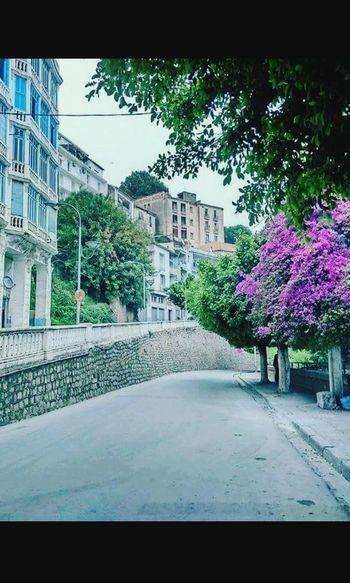 Bejaia Ville Street Of La Brise De Mer 😊 No People Flower City Life Rafik