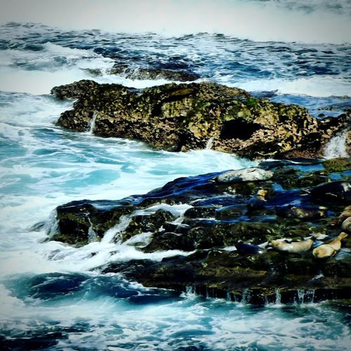 Beauty In Nature Wave Tranquility No People Outdoors Power In Nature Day Water Nature Sky Sea Lions Ocean Photography Eyeem Photography My Photography EyeEm Best Shots Photooftheday EyeEm Gallery Eyeem Market Animal Sealion  Sea Life Beauty In Nature My Photos ♥ Seals On Rocks Sealife Lost In The Landscape