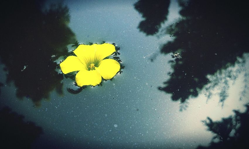 First Eyeem Photo Water Reflections Yellow Flower Purity Simplicity