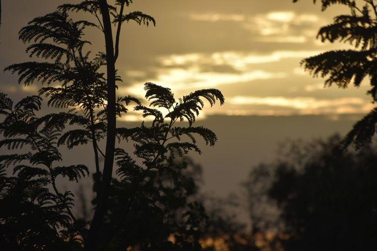 #Dark #sunset #sun #clouds #skylovers #sky #nature #beautifulinnature #naturalbeauty #photography #landscape #trees Silhouette Leaf Nature Outdoors Silhouette Sky Sunset