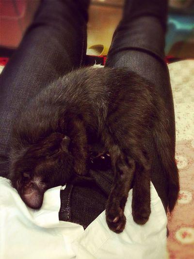 Black cat Cat First Eyeem Photo