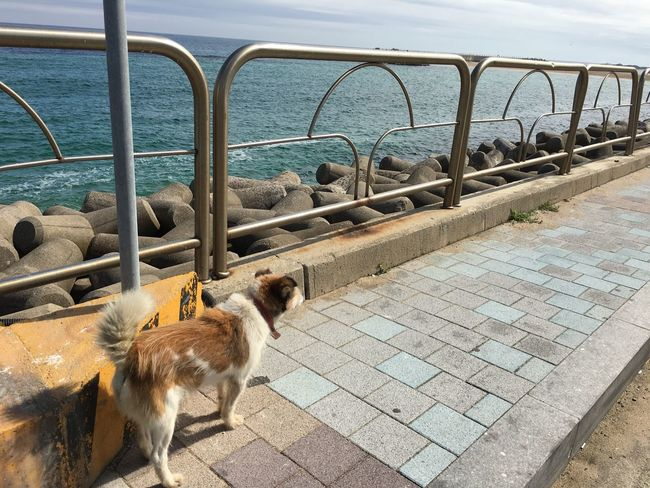 I wonder his story. Stray Dog Lost Dog Sea Dog No People Nature Free Loneliness Tetrapods Street