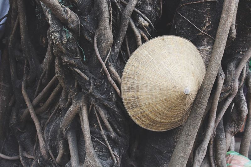 Abandoned conical hat Vietnam Hoi An Feel The Journey Tree Brown ASIA Conical Hat South East Asia Fine Art Photography My Best Photo