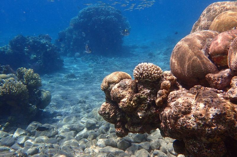 Close-Up Of Coral Swimming In Sea