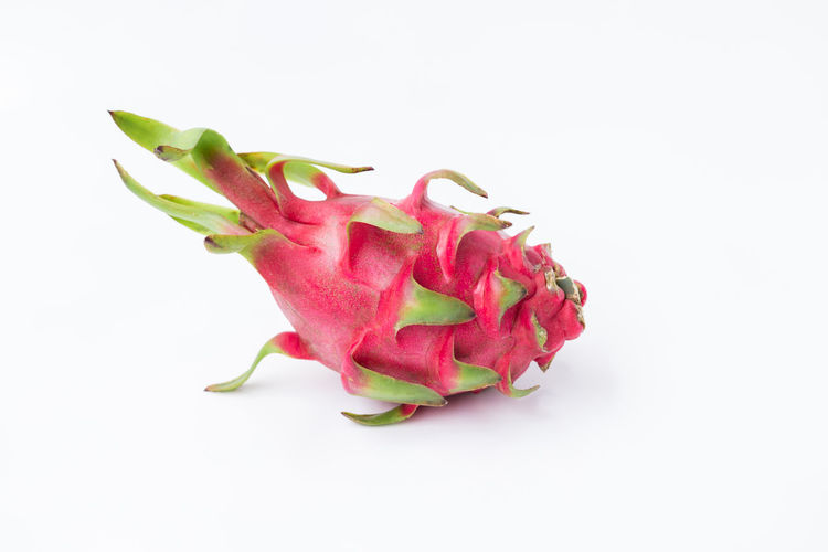 Close-up of pink flower over white background