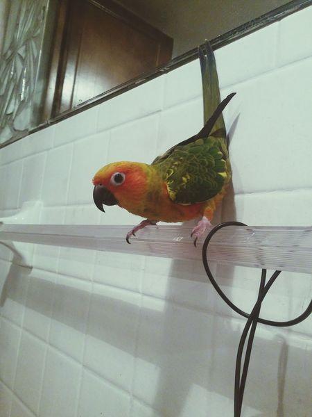 Birds Parrot Parrot Lover Cute Pets