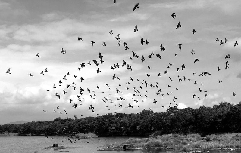 Flying Flock Of Birds Sky Nature Outdoors Scenics Cloud - Sky Beauty In Nature