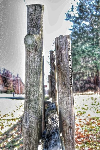 TGI Fence Post Friday HDR Collection TGIFencePostFriday Nature_collection