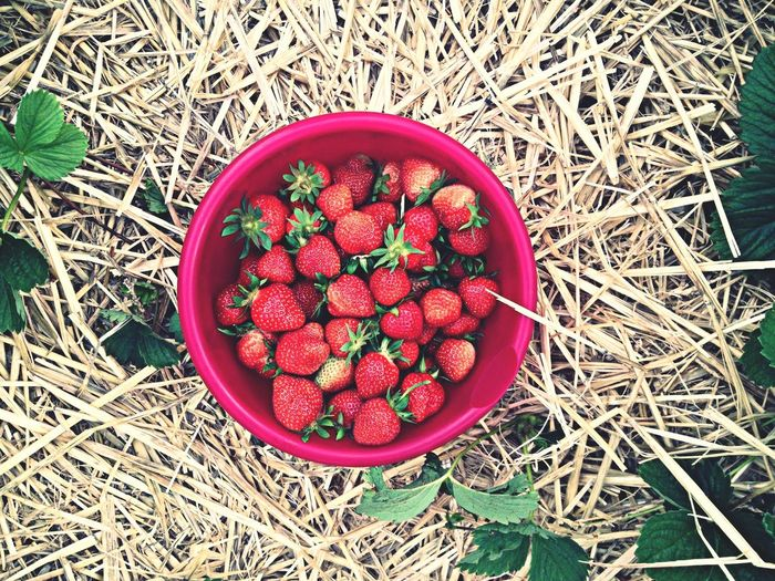 Directly above shot of container with harvested strawberries