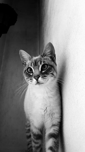 Pets Domestic Cat One Animal Animal Themes Domestic Animals Indoors  Feline Mammal Portrait Cute Looking At Camera Kitten Phonecamera PhonePhotography Samsung Galaxy S6 Edge Porto Portugal 🇵🇹 Black And White