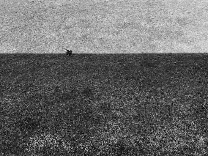 Cat Grass Shadow Light Separation Animal Territory