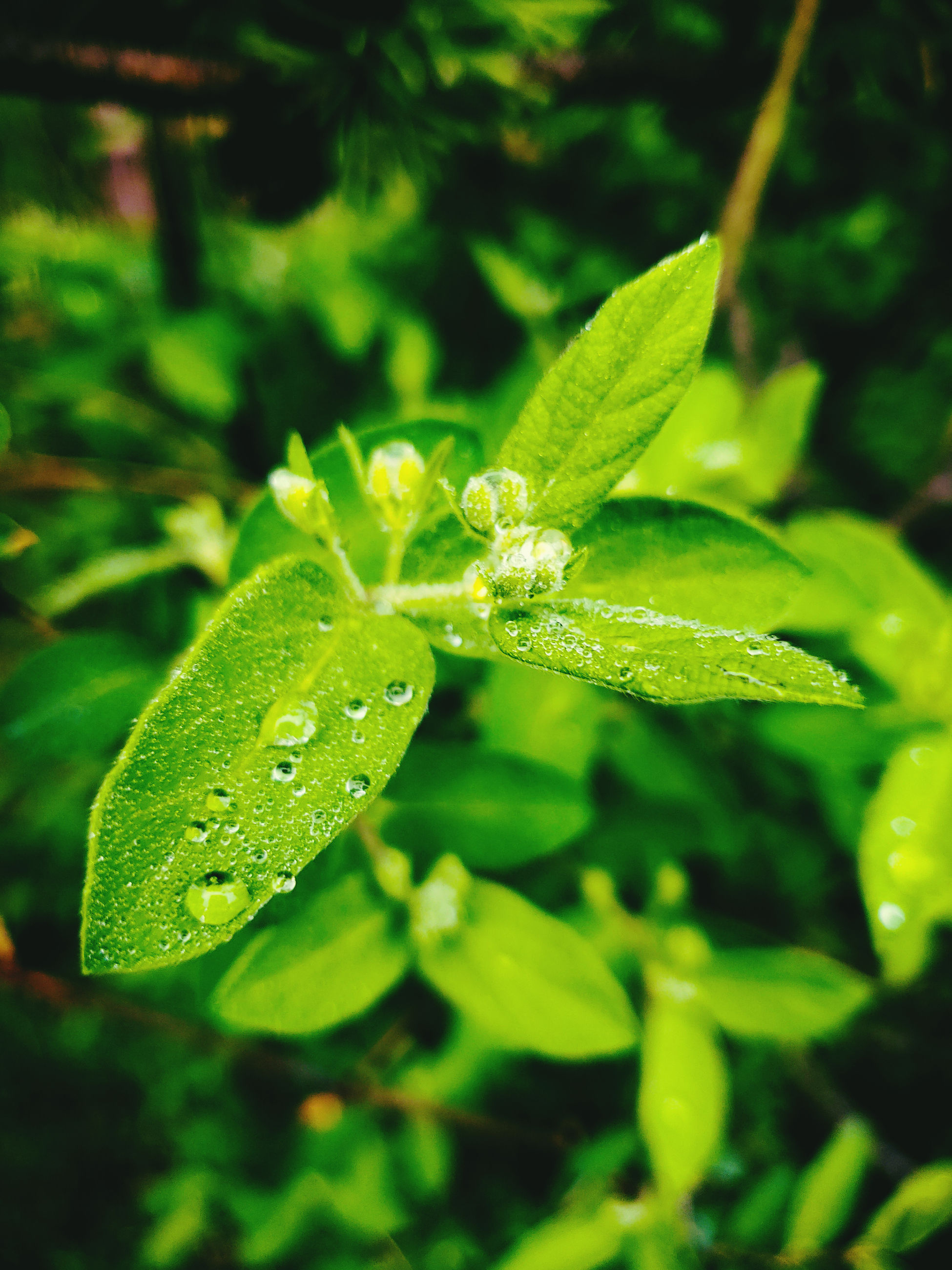 green color, plant, leaf, plant part, growth, drop, water, close-up, nature, wet, beauty in nature, no people, freshness, day, selective focus, focus on foreground, outdoors, fragility, vulnerability, dew, rain, raindrop, purity