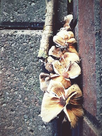 This Is Autumn day 12. Mushrooms Things On The Ground Pavement Rows Of Things Close-up Urban Nature