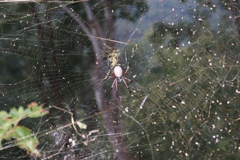 Spider Fragility Spider Web Close-up Spider One Animal Animals In The Wild Arachnid Invertebrate Vulnerability  Arthropod Animal Themes Nature Insect Animal Wildlife Beauty In Nature Day Focus On Foreground No People Outdoors Animal