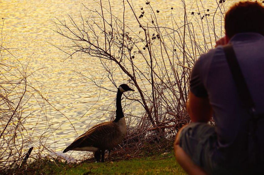 The gentleman and the photographer Goose Pond EyeEm Birds Birds Bird Photography Photography Photographer Park My Fiance  Wildlife