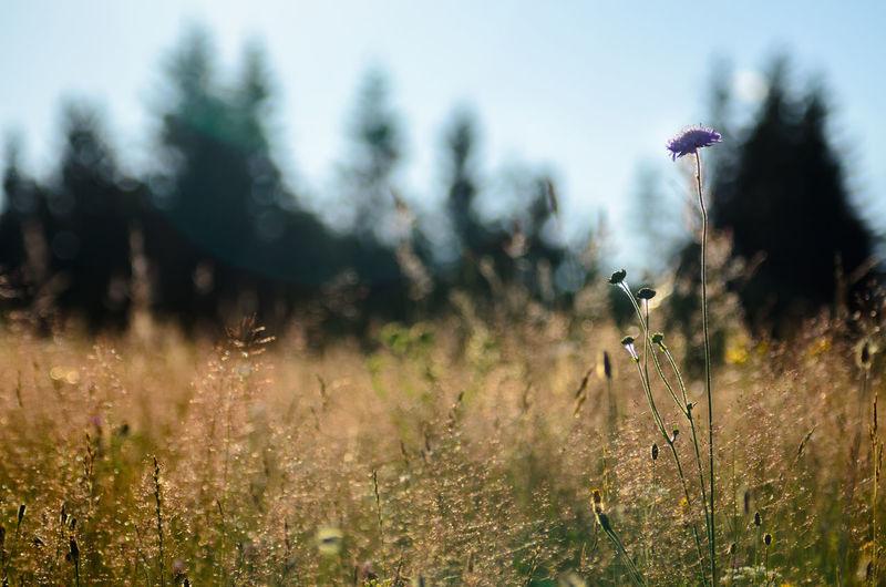 Field Nature Plants Plants 🌱 Romania Vegetation Wild Vegetation Yellow