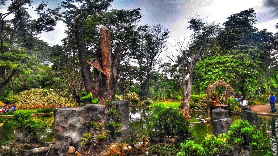 Nature Manila Philippines Quezoncity