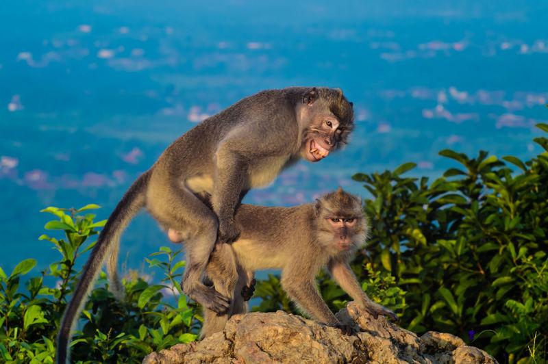 Monkeys mating on rock against sky
