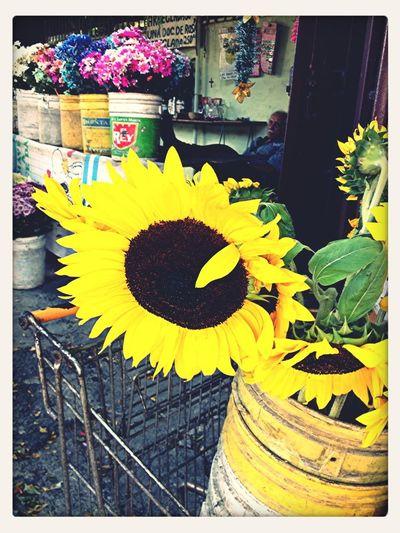 Las mejores flores se encuentran en la esquina del colegio nuestra señora de Lourdes