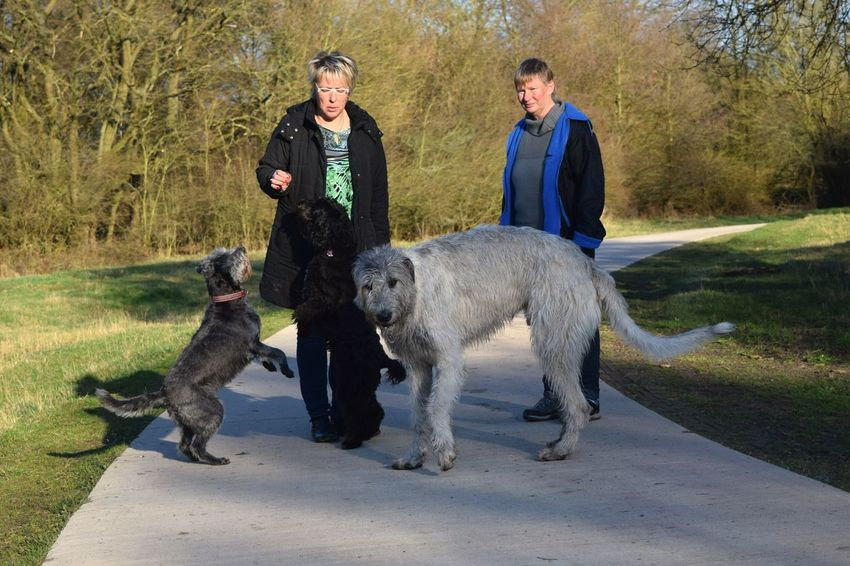 Dog Togetherness Animal Friendship Animal Themes Loyalty People Pet Owner Domestic Animals Outdoors Ways Through The World Portrait Dogwalk Dogs Of Spring Dog Of The Day Dogs Of EyeEm Irish Wolfhound Dogslife Cearnaigh Herrenkrugpark A Walk In The Park How Is The Weather Today? March 2017 Spring 2017 Sunlight