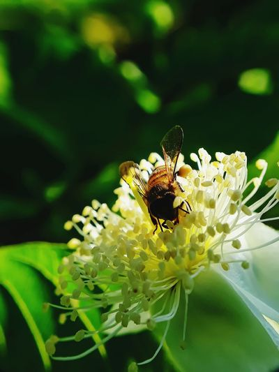 nectar hunting bee flower Perching Flower Full Length Leaf Conformity Eating Insect Honey Bee Symbiotic Relationship Pollination Stamen Pollen Petal Bee