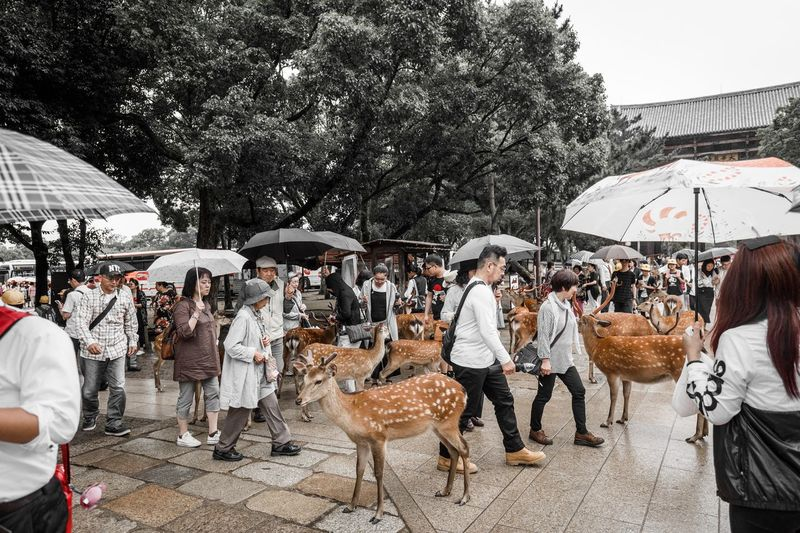 Real People Large Group Of People Crowd Group Of People Architecture Men Women Day Tree Nature Umbrella Adult Building Exterior City Market Lifestyles Built Structure Market Stall Outdoors Street Market