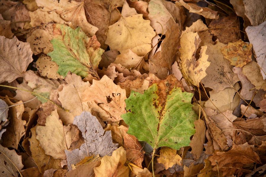 Autumn leaves, Azerbaijan Autumn Autumn Colors Autumn Leaves Azerbaijan Ivanovka Natural Nature Azerbaycan Ismayilli Leaves Season  Tourism Destination Tourist Destination Travel Destinations