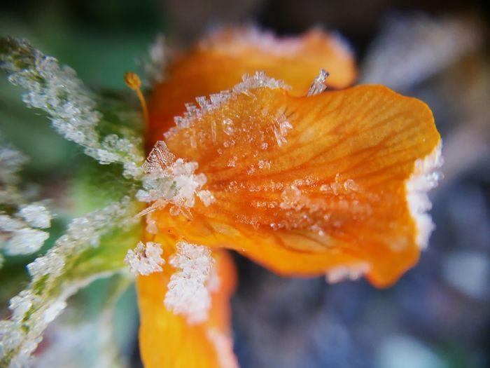 Rugiada Rugiada Flower Green Beautiful Nature Garden Garden Flowers Garden Photography Forst Nature Macro EyeEm Selects Flower Flower Head Multi Colored Orange Color Close-up Plant