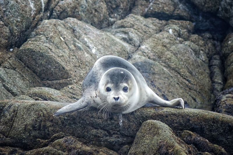 Seal on rock formation