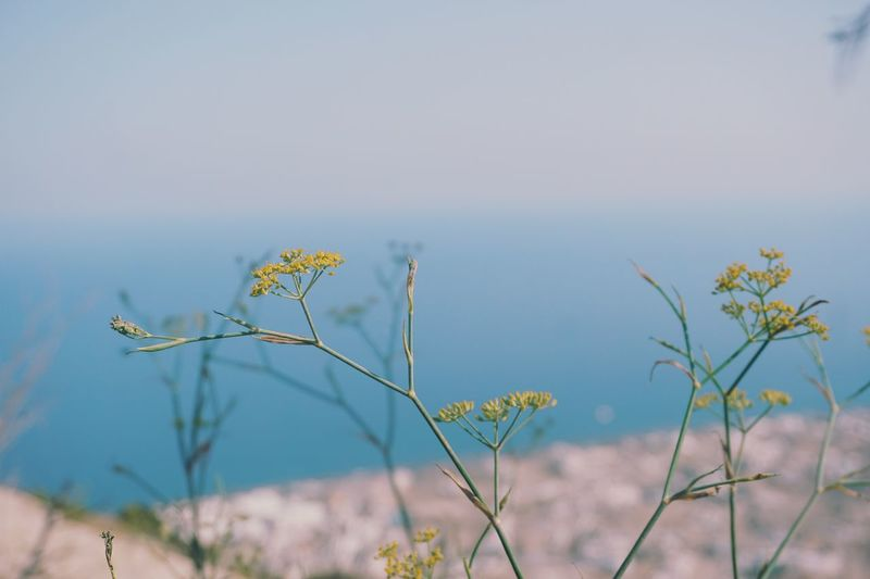wild flowers Greece Summer Yellow Flowers Sea Perissa View Seascape Ocean Flower Tree Bird Water Lake Rural Scene Natural Parkland Wilderness Uncultivated Flower Head Flowering Plant Prickly Pear Cactus Wildflower Plant Life