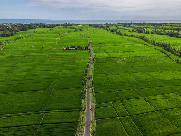 Rice field in south part of Tabanan Bali. The place name is Canggu and near the famous temple of Tanah Lot. Bali Best EyeEm Shot INDONESIA Lost In The Landscape Rice Rice Field In Ubud Bali Rice Paddy Tabanan, Bali, Indonesia Tanah Lot Temple Agriculture Baliphotography Farm Green Color Indonesia_allshots Indonesian Photographers Collection Landscape Nature Rice Field Rice Fields And Water Rice Fields Bali Rice Paddy Rice Terraces Ricefield Tanah Lot Tanah Lot Bali