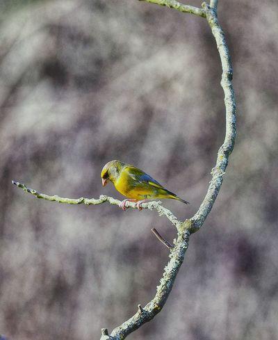 #nikond500 #nikon #nikonitalia #nikonromania #nikonphotography #nikon_photography_ c #nikon70200fl #birds #bird #birdwatching #water #firenze #florence #arno #travel #italia #travel #florence #watercolor #water #igers #igersitalia #igersfirenze #italigram #nikonlens