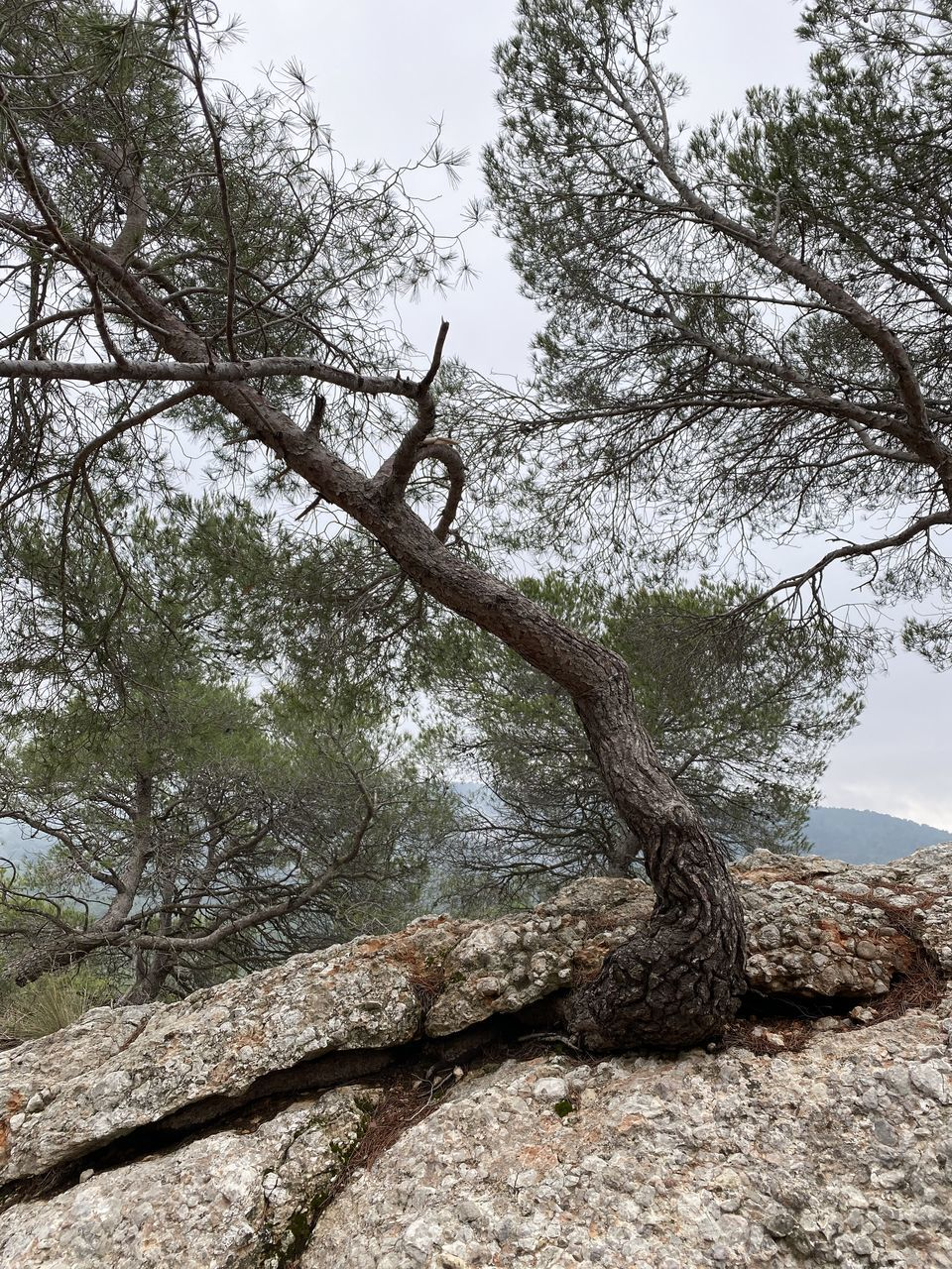 tree, plant, nature, no people, sky, growth, tranquility, branch, beauty in nature, day, rock, solid, tranquil scene, rock - object, tree trunk, outdoors, trunk, land, scenics - nature, focus on foreground