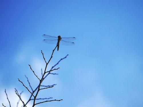 トンボ 秋空 Dragonfly Sunnyday Autumn Wings Blue Blue Sky Fall Fall Beauty
