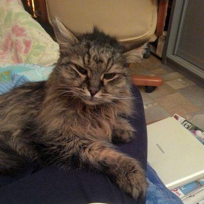 #кот #котэ #кошки #2014 #katz #katzen #cat #cats #instacats #catsagram #catsofinstagram #mycat #we_love_cats #instagramcats #caturday #catoftheday #猫 #kass #catlovers #cutecats #chat #kissa #instakotik #kedi #kot #katt #고양이 #貓 #gato #kucing Instagramcats Catsagram Cat Catoftheday Cats Catlovers Gato 2014 貓 кот Katzen Instacats котэ Instakotik Caturday кошки Kedi 고양이 猫 Katt Chat Cutecats Mycat Kot Kissa We_love_cats Kucing Kass Catsofinstagram Katz