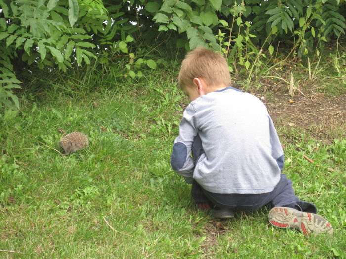 Rear View Of Boy Looking At Hedgehog While Crouching On Field