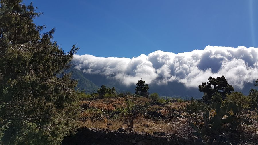 Wolkenwasserfall auf La Palma, Cloud waterfall Clouds And Sky Clouds Clouds Collection EyeEm Nature Lover Cloud Waterfall Nature Nature_collection Nature Photography Natur Tree Water Forest Blue Tree Area Mountain Sky Landscape Scenics