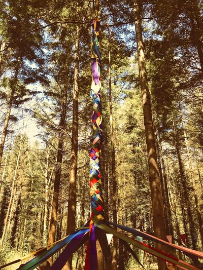 Maypole Tradition Dancing Maypole May Real People Tree Day Childhood Sunlight Leisure Activity One Person Nature Outdoors