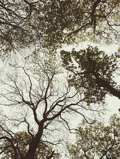 Woods Bristol Clifton England Trees Leaves Green Sky Walking Around Taking Photos