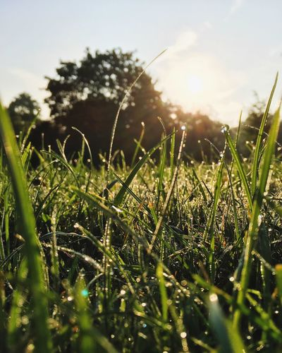 Grass Growth Field Selective Focus Plant Close-up Nature Green Color Wet Blade Of Grass Drop Beauty In Nature Tranquility Freshness Dew Surface Level Water Grass Area Day Meadow