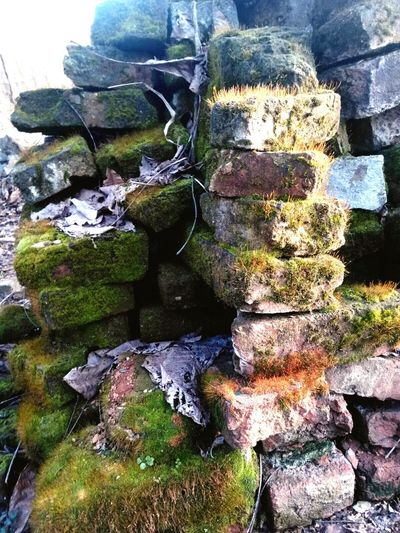 Nature Nature Nature Photography Nature Lover Bricks Pastel Power Nature Lovers Brickswork Nature_collection Naturelover Over Time In Time Old Bricks Things I Like