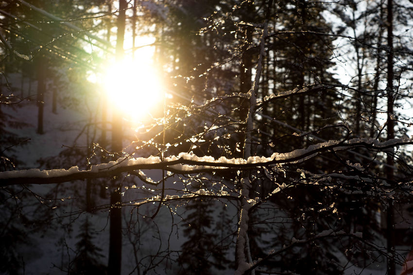 sun Branches Snow ❄ Beauty In Nature Branch Day Forest Freshness Growth Ice Covered  Ice Covered Tree Nature No People Outdoors Snow Covered Trees Sun Sunlight Sunshine Tranquility Tree