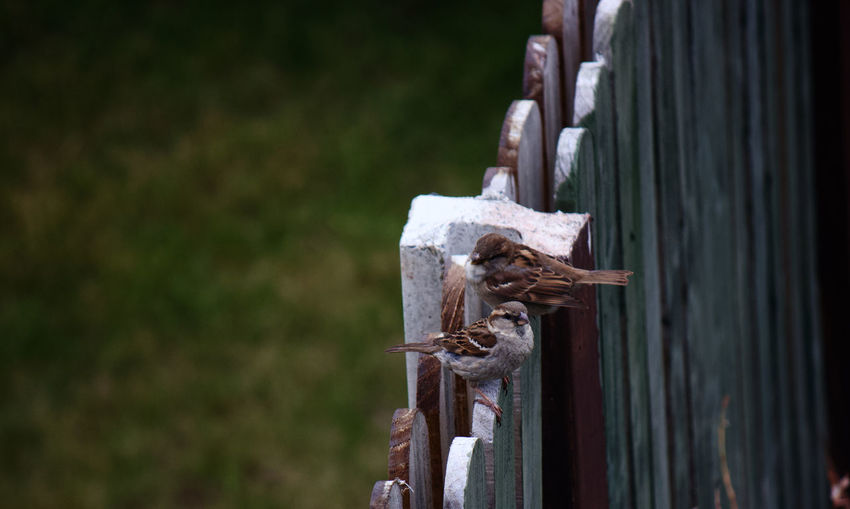 Close-up of rusty metal in cemetery