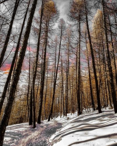 Tree Snow Cold Temperature Winter Backgrounds Full Frame Close-up Sky Tranquility Snowcapped Calm Scenics