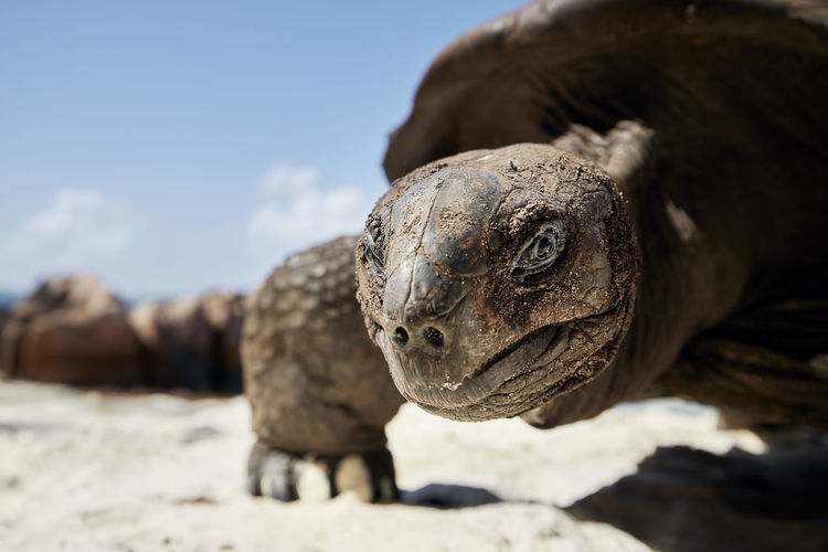 Close-up of a turtle looking away