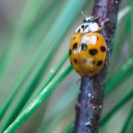 Close-up Animal Themes Insect Animal One Animal Animal Wildlife Invertebrate No People Beetle Ladybug Green Color Nature Outdoors