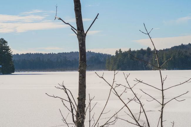 Lakeside on Lake Colby after an Arctic blast freezes an otherwise defiant lake Backdrop Backgrounds Barren Trees Beautiful Lake Colby Lake View Snow Trees And Sky Winter Wintertime
