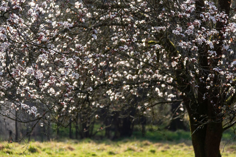 Plant Tree Growth Blossom Beauty In Nature Springtime Nature Branch Tranquility No People Outdoors Westonbirt Arboretum